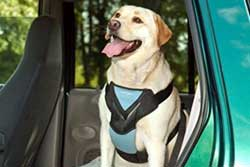 dog harness for the car
